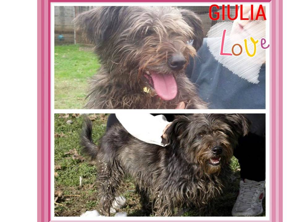 giulia-collage-canixcaso.jpg