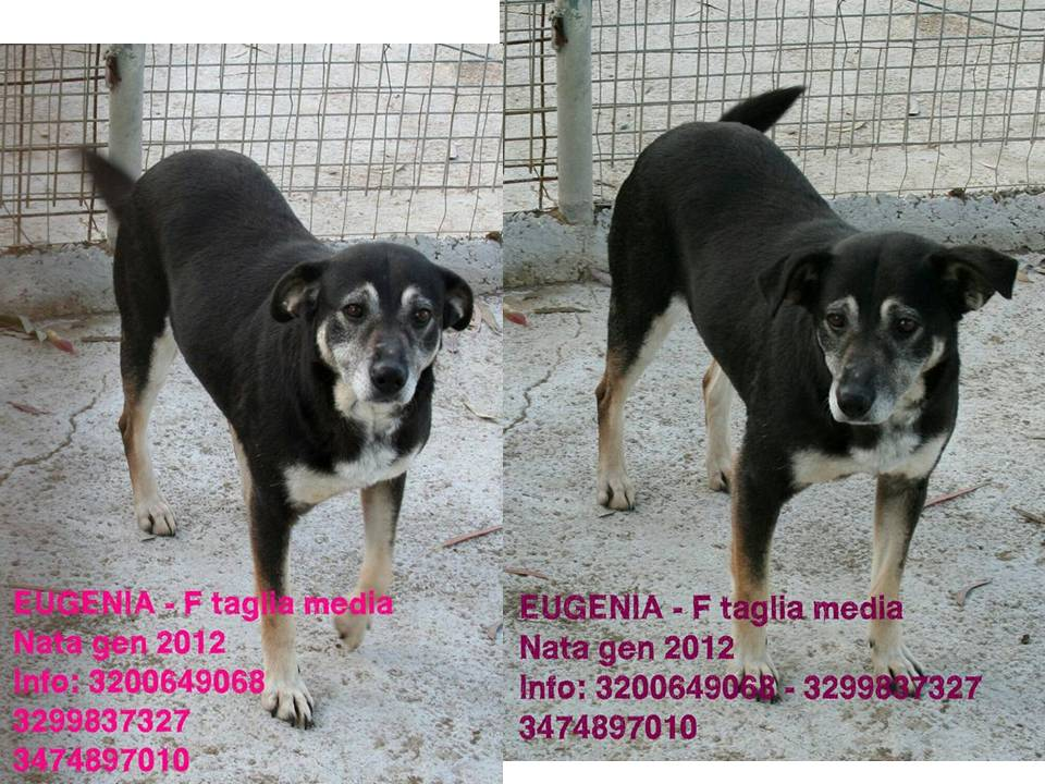 eugenia-new-aversa.jpg