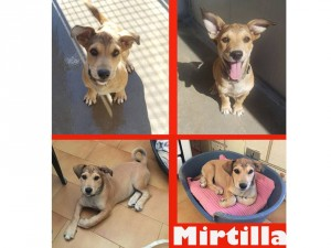 MIRTILLA simpatico buffo musetto!