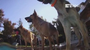 DOG TV: LA TELEVISIONE PER CANI