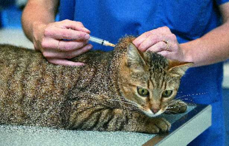 Come somministrare i farmaci al gatto