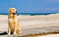 LE SPIAGGE SALENTINE PET-FRIENDLY