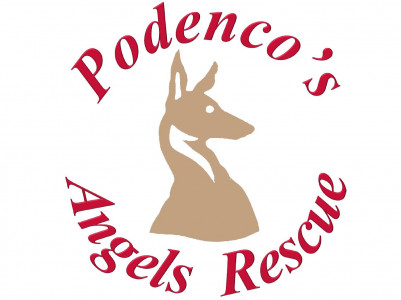 Podenco's angels rescue
