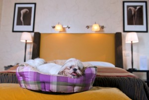 Space Hotels: gli alberghi italiani pet-friendly