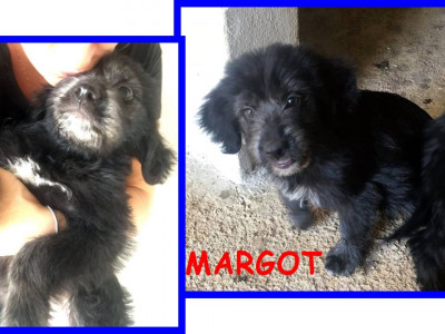 MARGOT dolce musetto futura tg 10kg